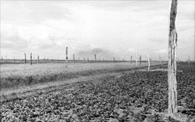 "German Atlantic Wall defenses: ""Rommel's asparagus"" in French field, 1944"