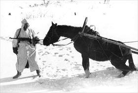 German soldier tugs at horse-drawn cart, winter 1941